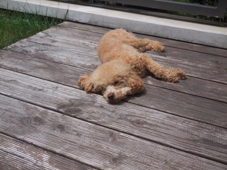 Scarlett soaking up some sun