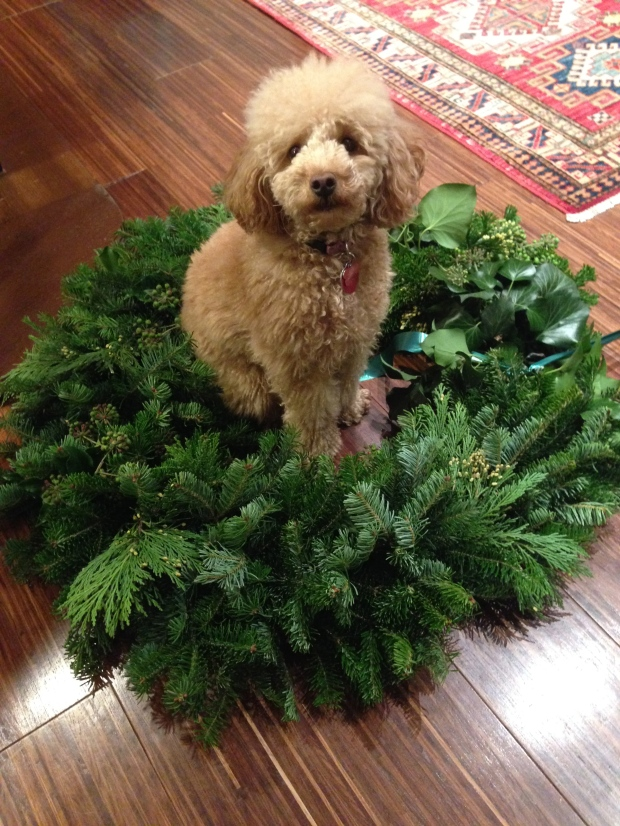 snapshot sunday: scarlett in a christmas wreath flashback for easter