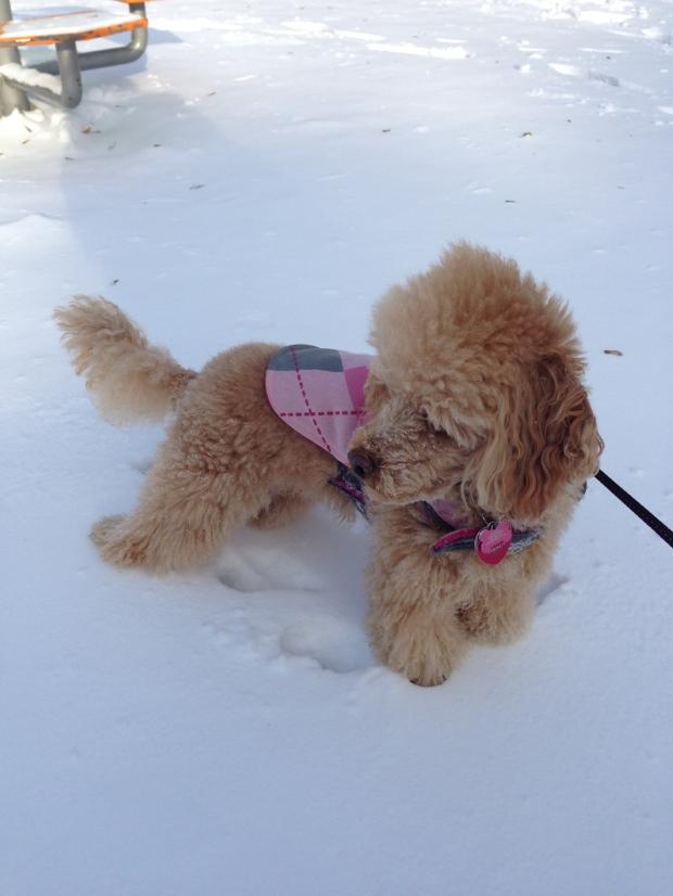 scarlett-snow-2014
